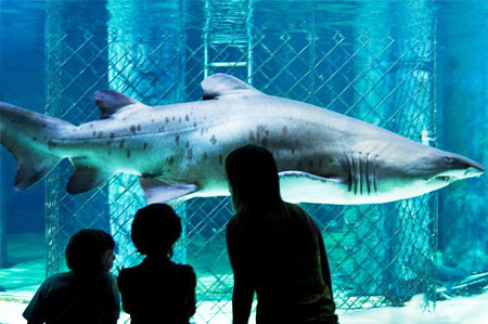 Visit the aquarium of Cattolica